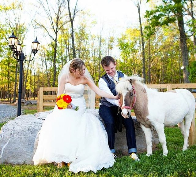 In case you were wondering if we have any experience working with tiny wedding horses... why yes we do!