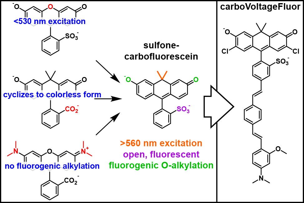 EWM TOC carboVF for website-01.png