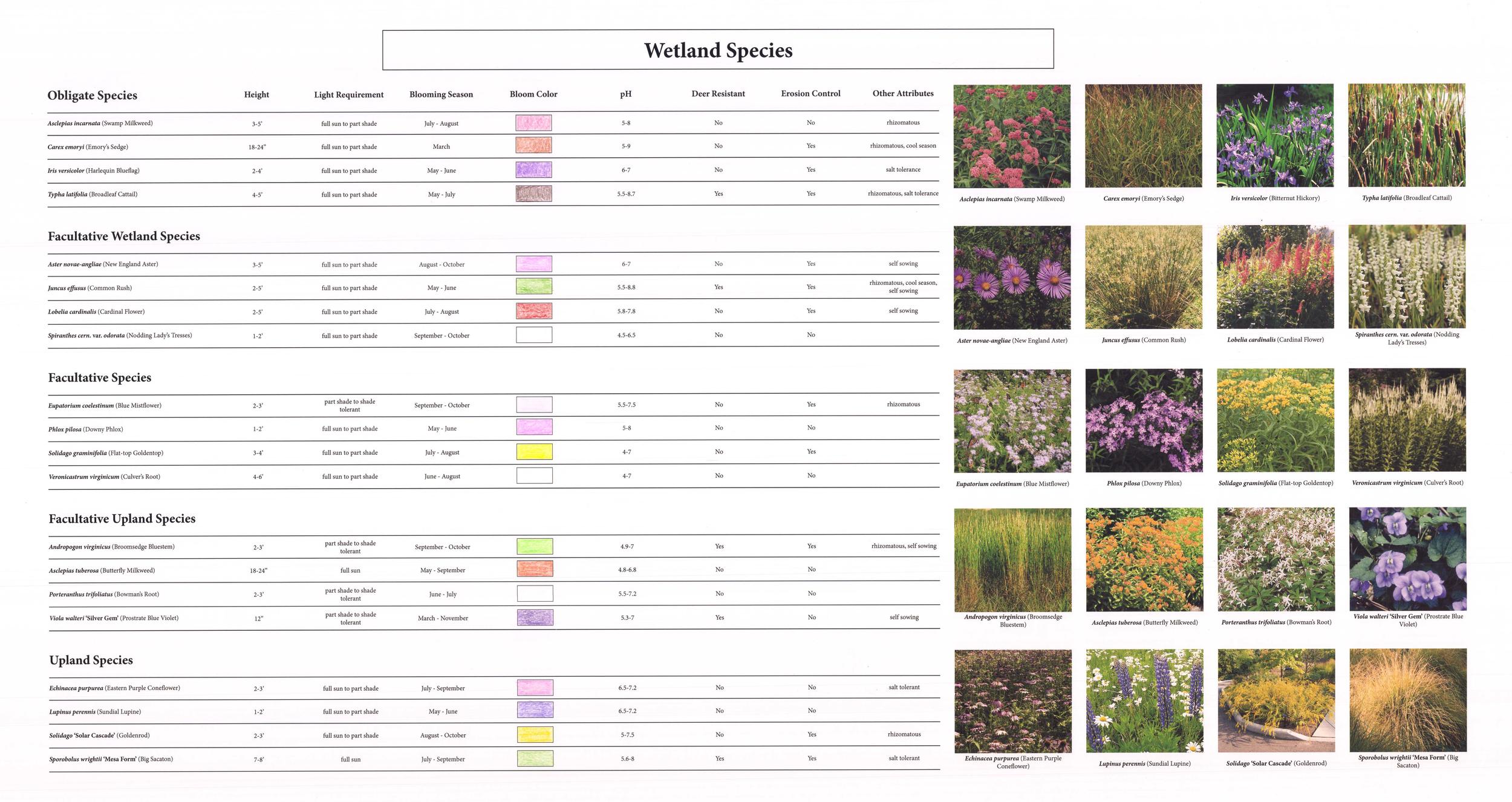 Wetland Species.jpg