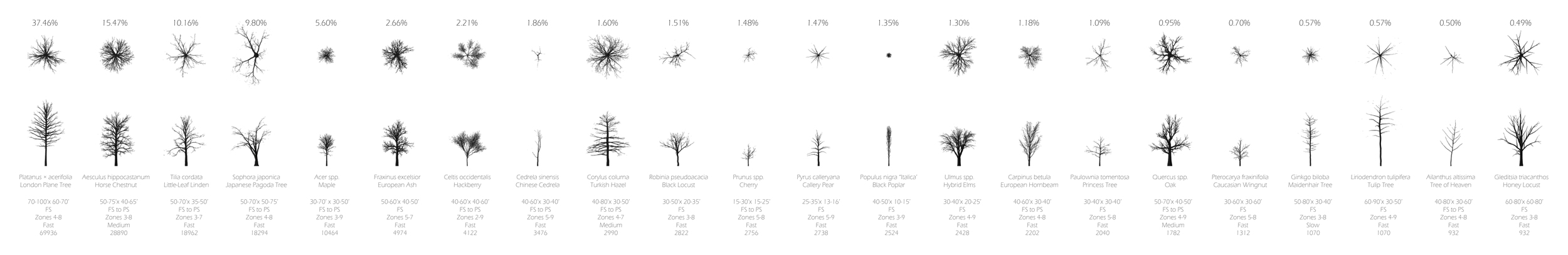 The 22 most common Paris street trees range from the London Plane Tree to the Callery Pear to the European Hornbeam.
