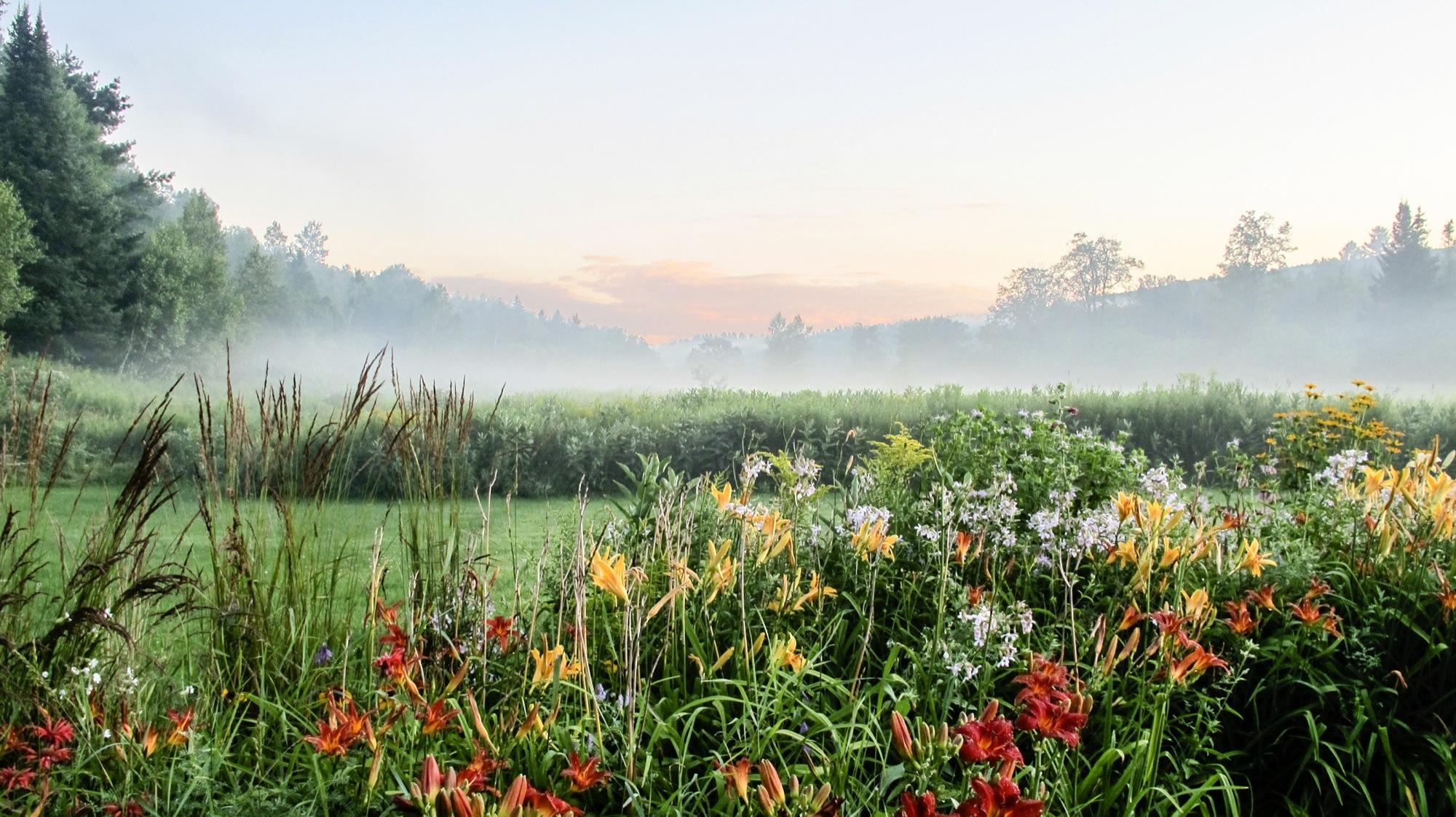 35-Lipke -- mist off the meadow.jpg