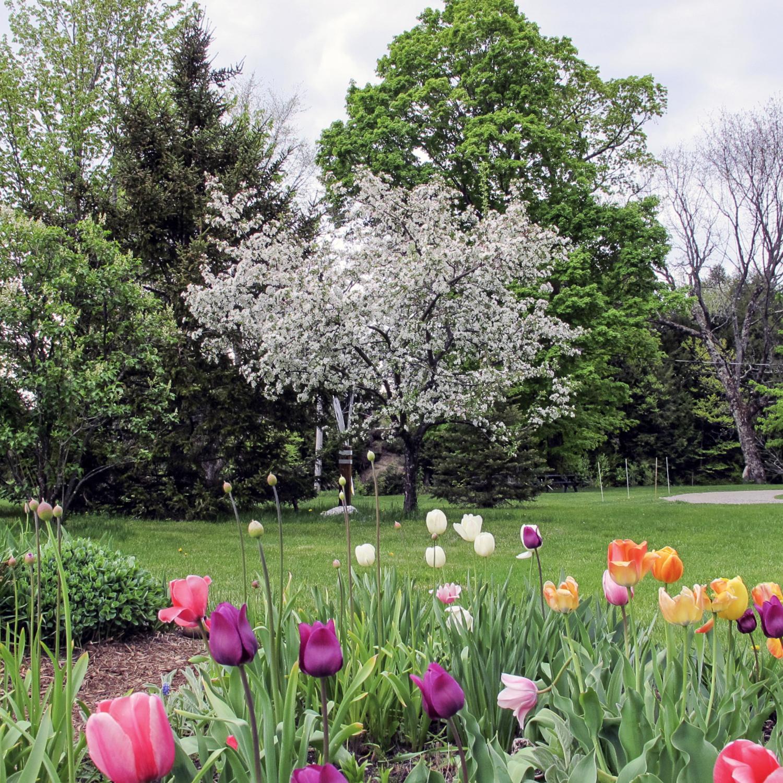 44-Lipke -- spring garden.jpg