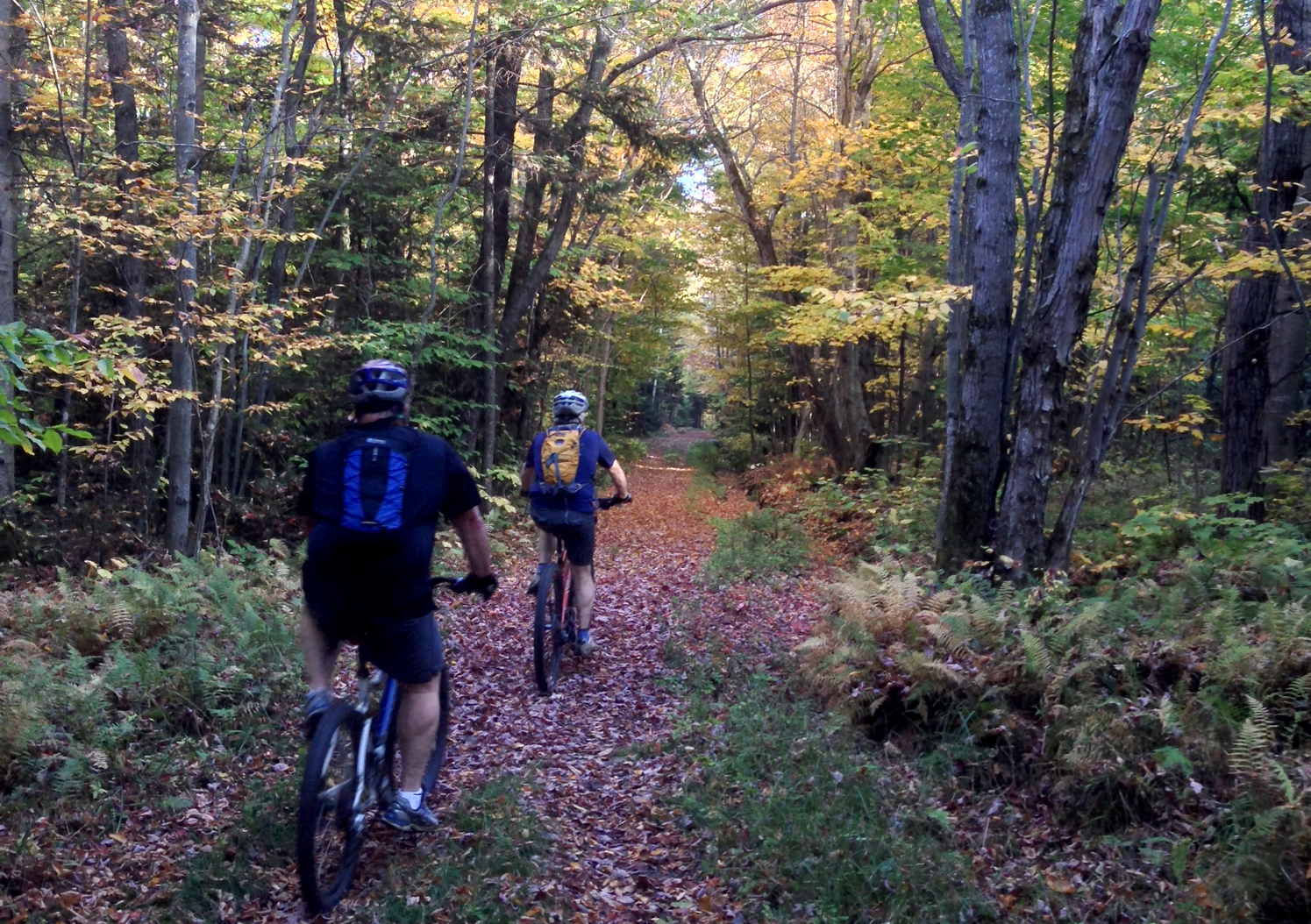 Mountain Biking in Sterling Forest, Stowe