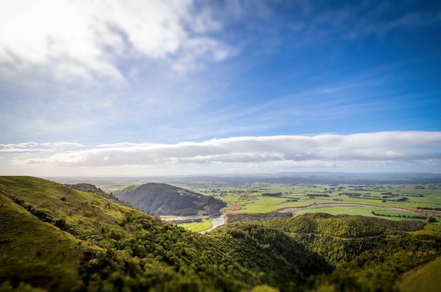 Ricoh, doing their bit to keep NZ beautiful!