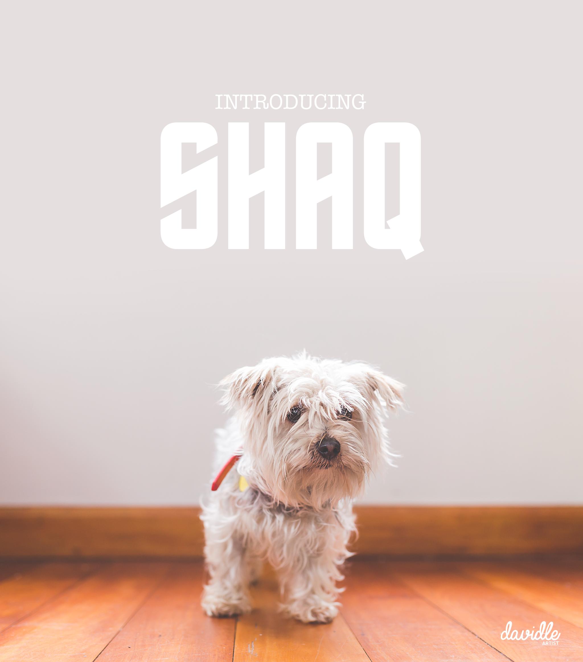 Meet the big guy, Shaq!