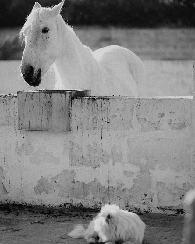 Thanks to @katjabrinkmann #pioggia #masseriaprosperi #masseriamontelauro #puglia #apulia #horses #animals #cavalli #luxuryboutiquehotel #vitadicampagna #happyness #otranto #salento #italia #italy