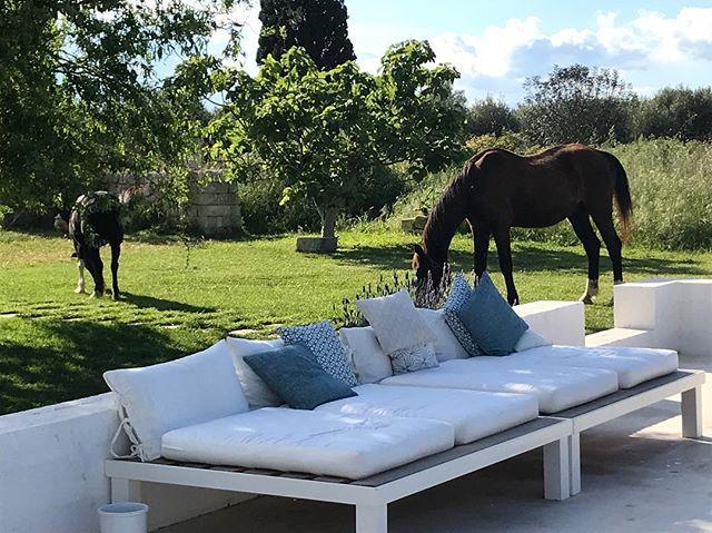 #masseriaprosperi #masseriamontelauro #otranto #puglia #salento #today #apulia #alimini #horses #cavalli #campgna #countrylife #mylife #me #vitadicampagna
