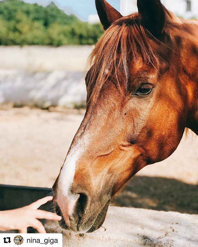 #Repost @nina_giga with @get_repost ・・・ Le carezze del mattino  #apuliandetails #masseriaprosperi #masseriamontelauro #masseriesalento #pugliastyle #thanksto @nina_giga #hoses #animals #animali #cavalli #mare