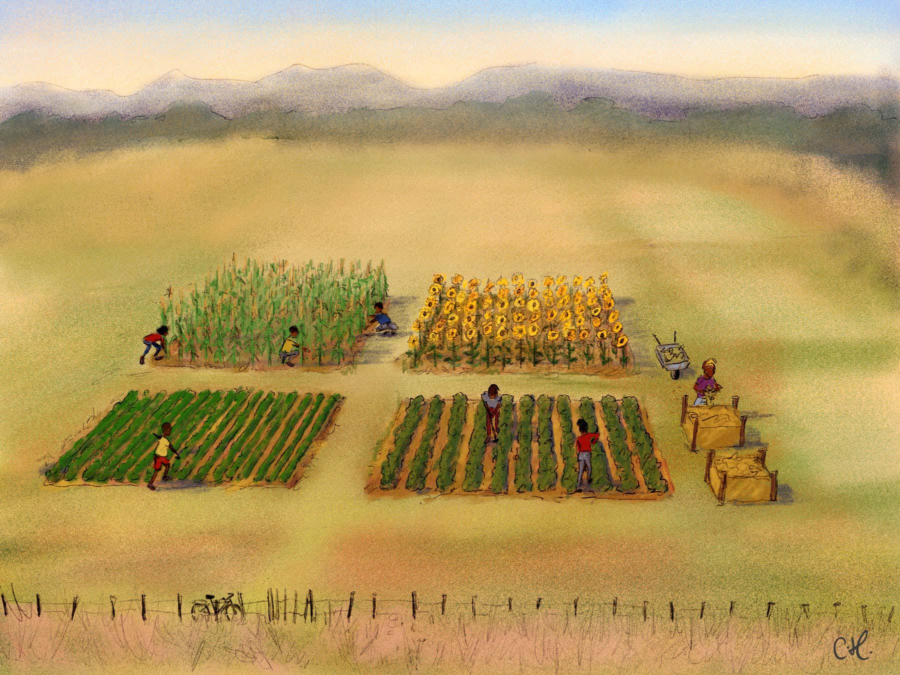 2_Farming_Scene_First_Year.jpg