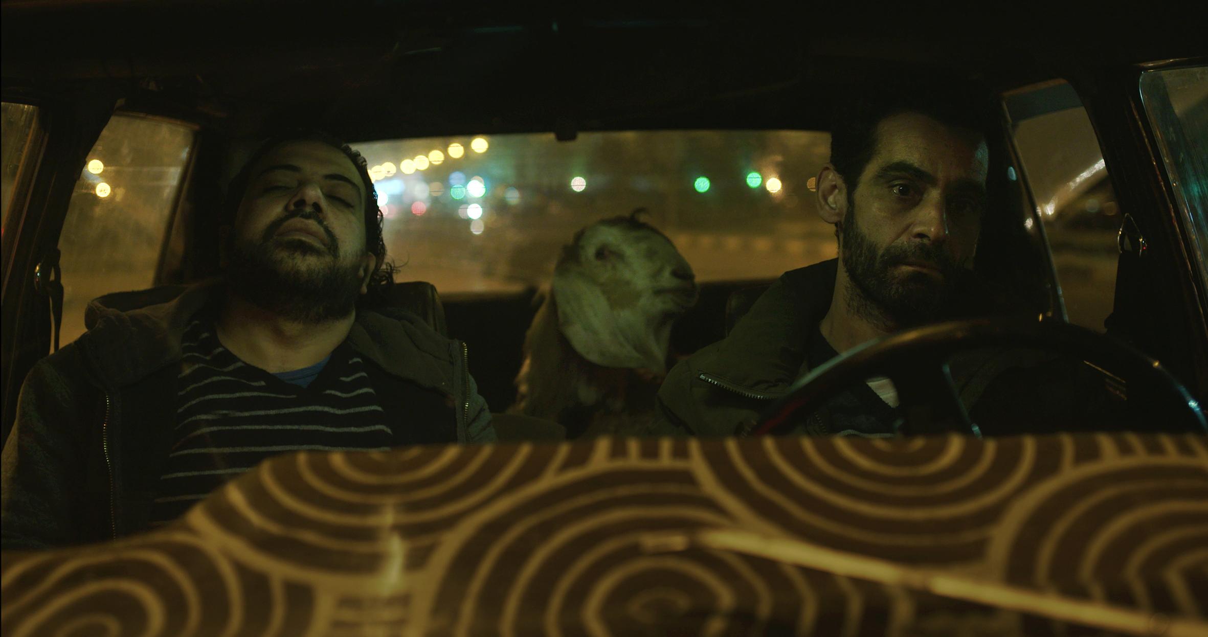Dear Animal, 2016, single channel video, 24 min.  WATCH HERE