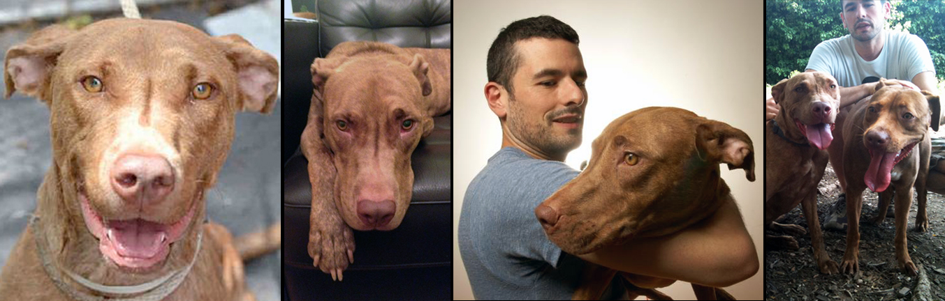 HARMONIA . Rescued from the euthanasia list at a kill shelter in Manhattan. Harmonia now loves nothing more than to greet every dog and every human at her Brooklyn dog park - including her separated-at-birth twin (Sav-a-Bull's very own) Dan.