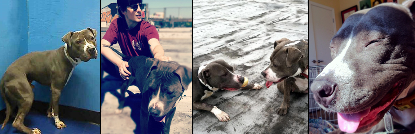 WILSON.  Rescued from a kill shelter in Brooklyn. He now loves playing with his old neighbor and best doggie friend Stella, playing fetch with his daddy Sean and eating green apples every chance he has.