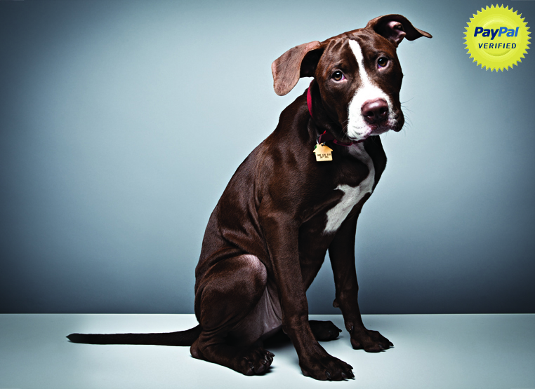 MILA. Rescued from a kill shelter in Manhattan, after being surrendered due to anti–pit bull housing regulations.