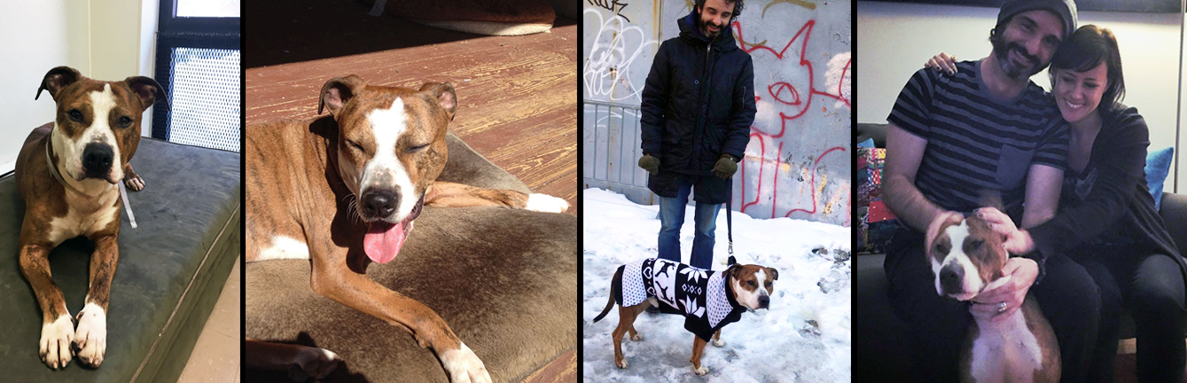 REMI.  Rescued from a shelter in Long Island after being found as a stray. Remi now lives happily in Brooklyn with his wonderful mom Mara and his dad Aaron, the lucky boy also gets to go to Maryland to visit and lounge in the sunwith the rest of his human and doggie relatives.