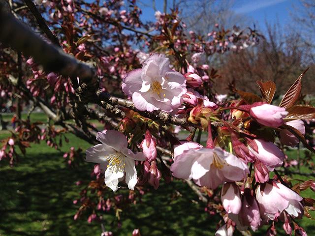 brooklyn-botanic-garden-2
