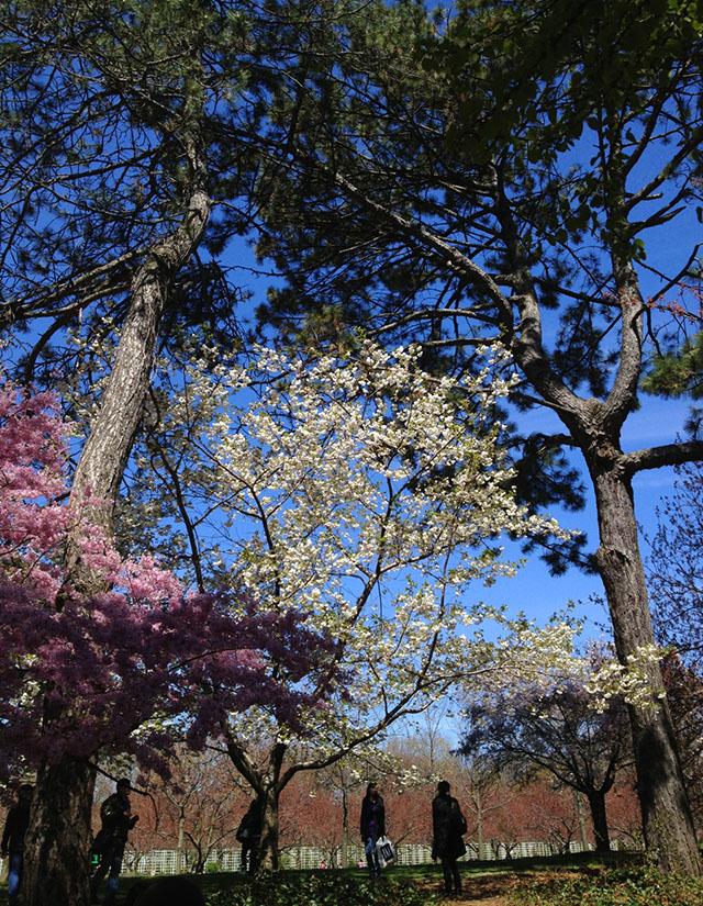 brooklyn-botanic-garden-3