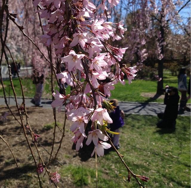 brooklyn-botanic-garden-4