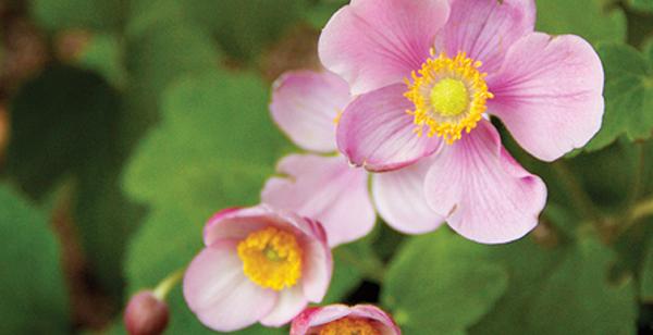 Mott's Landscaping-Purple white ones.jpg