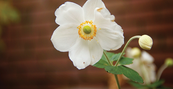 Mott's Landscaping-White flower.jpg