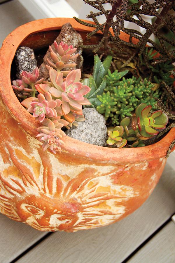 Potted Succulents 1-Jordan.jpg