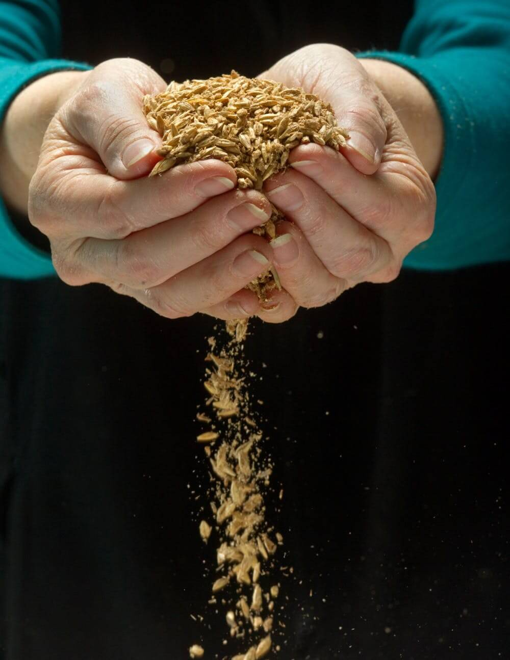 Dr. Peggy Lemaux, holding seeds from the hypoallergenic wheat she helped develop with genetic engineering. James Block, CC BY-SA