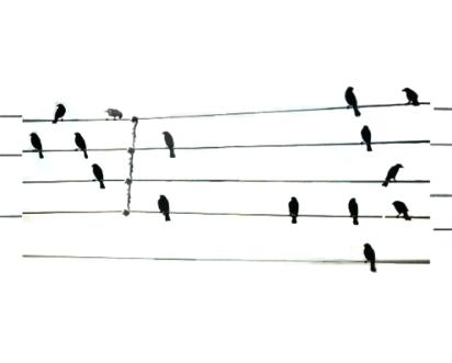 New Bird Icon.jpg