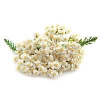 Yarrow herbal extract