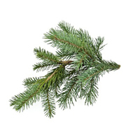Canadian fir essential oil is best for oily and blemished skin.