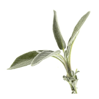Sage essential oil is best for blemished, combination, oily skin and anti-aging.