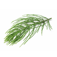 Horsetail herbal extract is best for dry-dehydrated and oily skin.