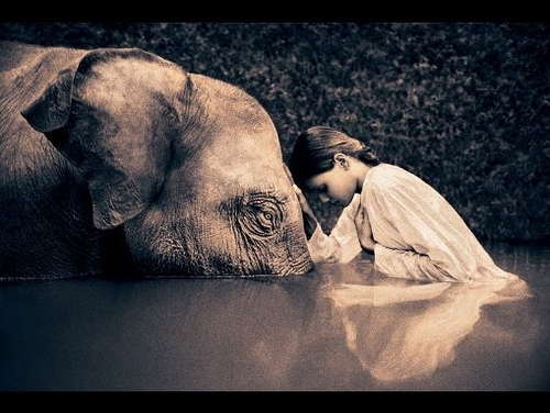 elephant-and-girl.jpg