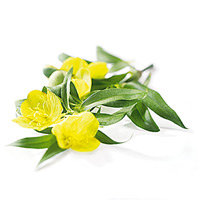 Evening primrose is best for dry skin and anti-aging.