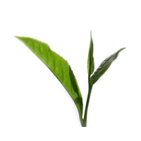 Green tea herbal extract is good for all skin types.