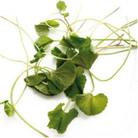 Lady's mantle herbal extract is best for blemished and oily skin.