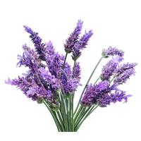Lavender essential oil is best for blemished and sensitive skin.