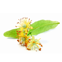 Linden flower herbal extract is best for sensitive skin and anti-aging.