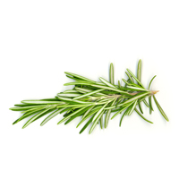 Rosemary verbenon essential oil is best for blemished skin and anti-aging.