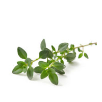 Thyme linalol essential oil is best for blemished, combination and oily skin.