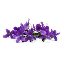 Violet leaf herbal extract is dry, balanced and oily skin.