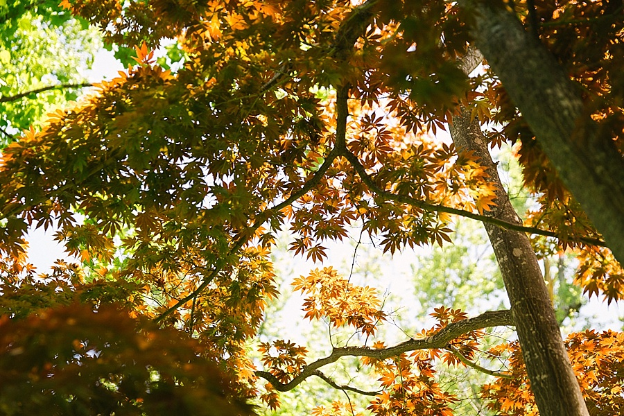 Horticulture_Garden_Wedding_Michigan_0005.jpg