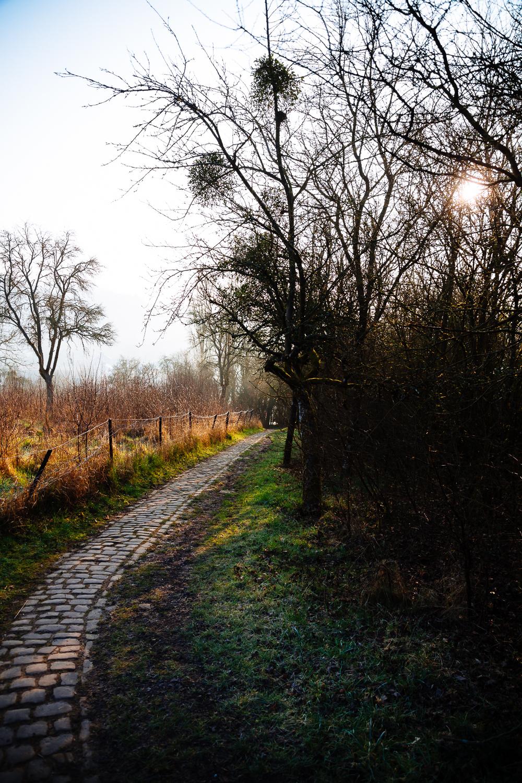 20140314 Morning Walk - 4013.jpg