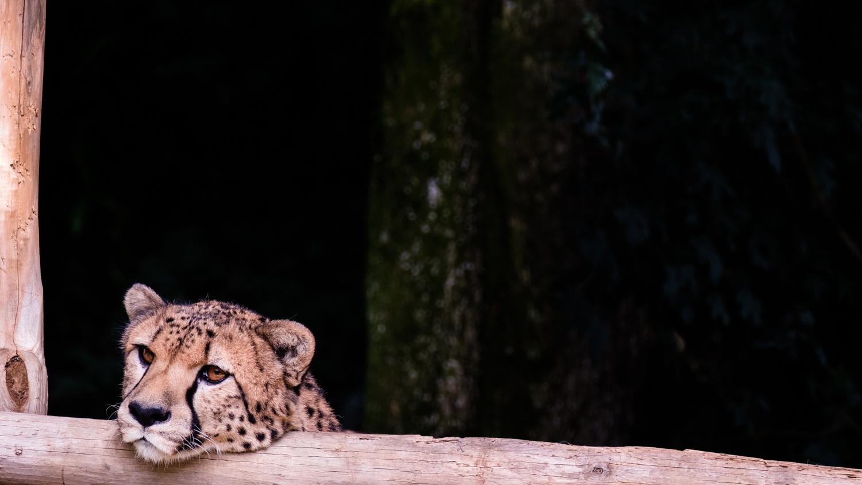 Zoo Amnéville-7.jpg