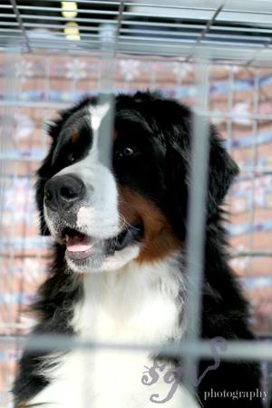 dog_show_bernard_blog.jpg