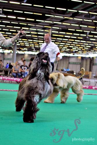 dog_show_afghan_defile_blog.jpg