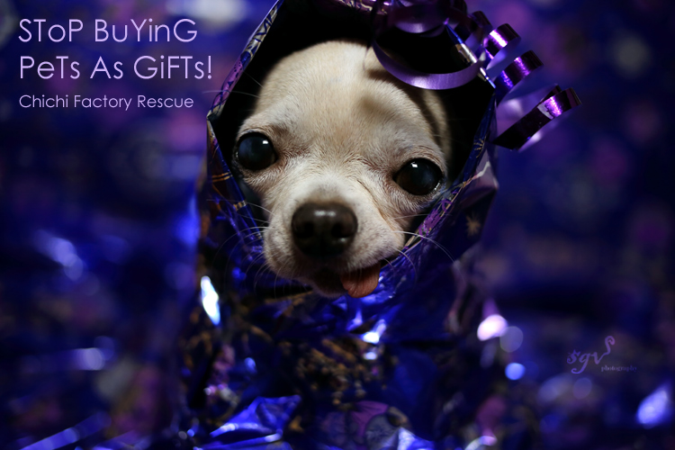 A dog is not an object you give as a gift!
