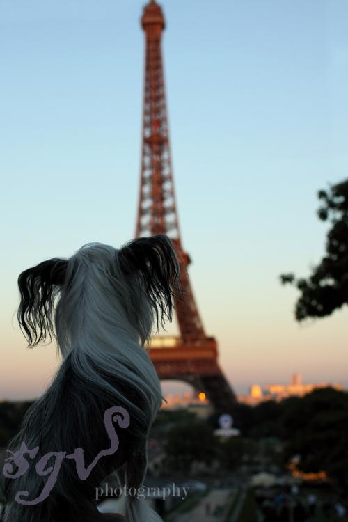 Paris_52-26_web.jpg