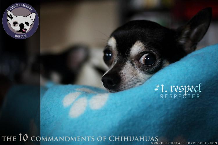 10_commandments_1.jpg