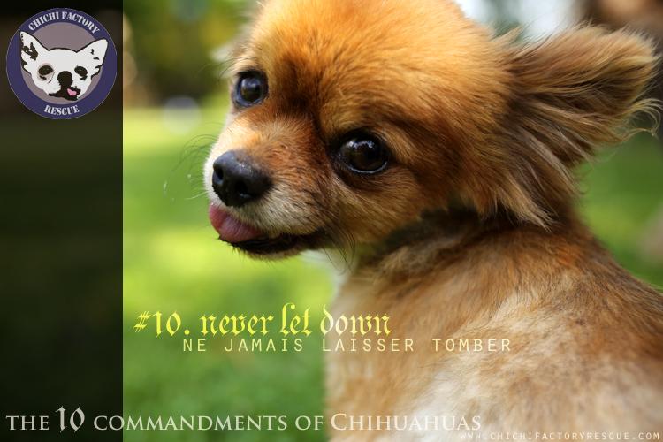 10_commandments_10.jpg