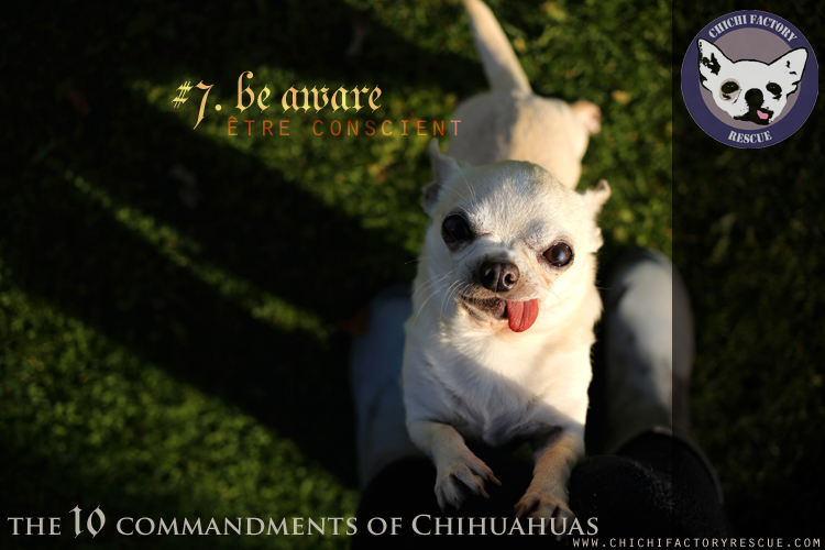 10_commandments_7.jpg