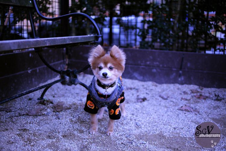 hammie_dogpark_web.jpg